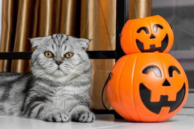 Kat in het halloween-festival.