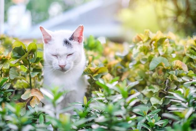Kat in het park