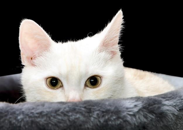 Kat in het spelen van huis