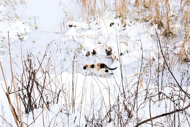 Kat in het winterseizoen
