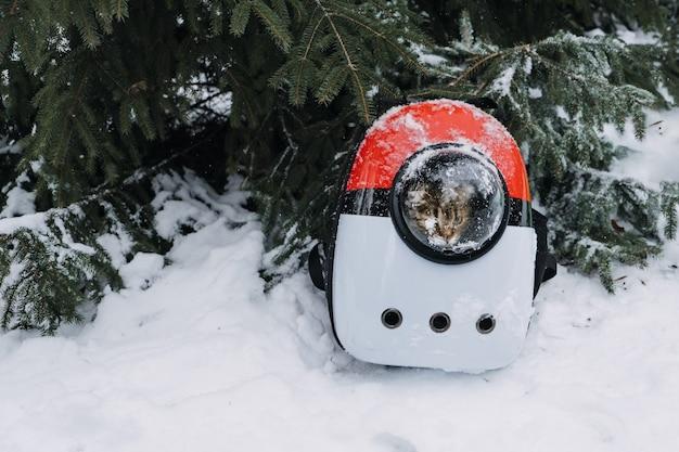 Kat in hondentas rugzak in winterpark bos bubble rugzakdrager voor katten luchtvaartmaatschappij goedgekeurd