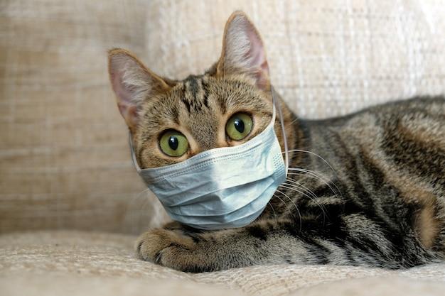 Kat in medisch masker op quarantaine thuis.