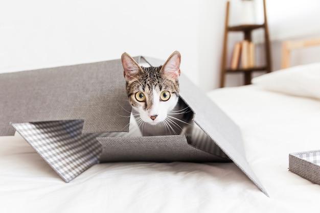 Kat in papieren doos