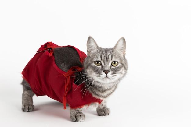 Kat in rode medische deken voor katten, isoleren op wit