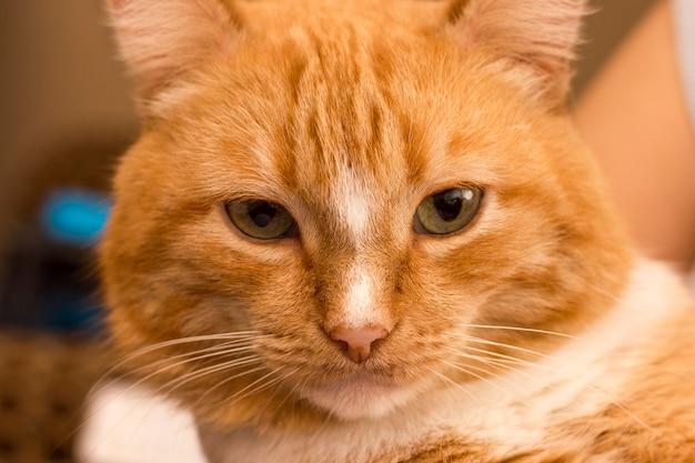 Kat kijk van dichtbij
