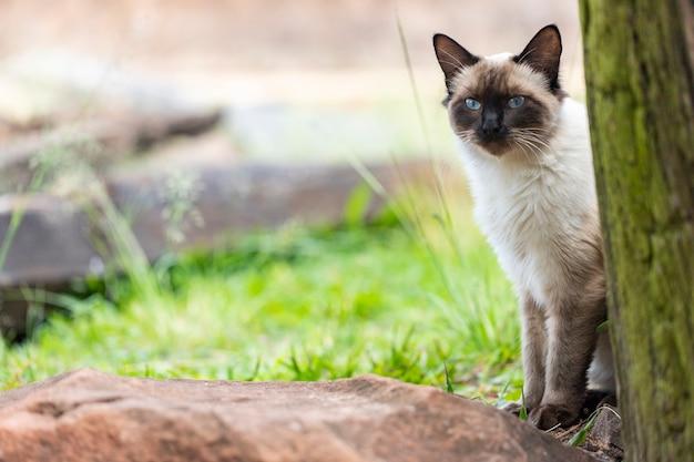 Kat kijken van achter een boomstam.