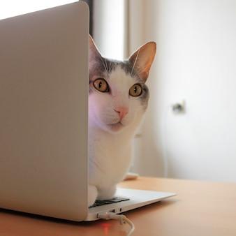 Kat kijkt achter het scherm