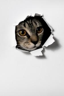 Kat kijkt door het gat in het gescheurde papier