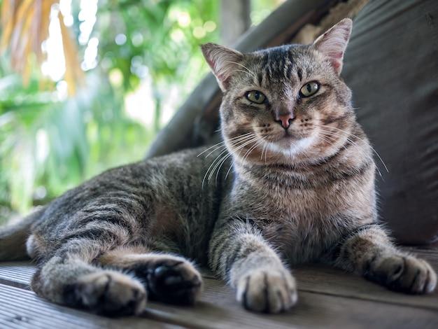 Kat kijkt naar de camera