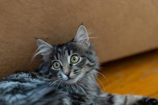 Kat kijkt zorgvuldig wijd open ogen