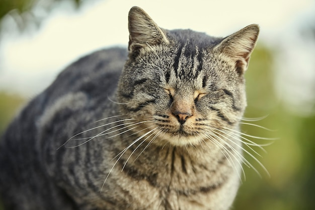 Kat liggend op de muur rust bij zonsondergang