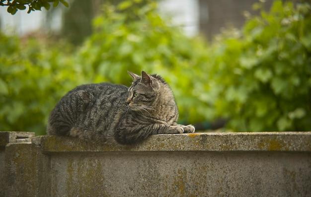 Kat, liggend op een muur midden in de natuur, kijkt er heel kalm naar.