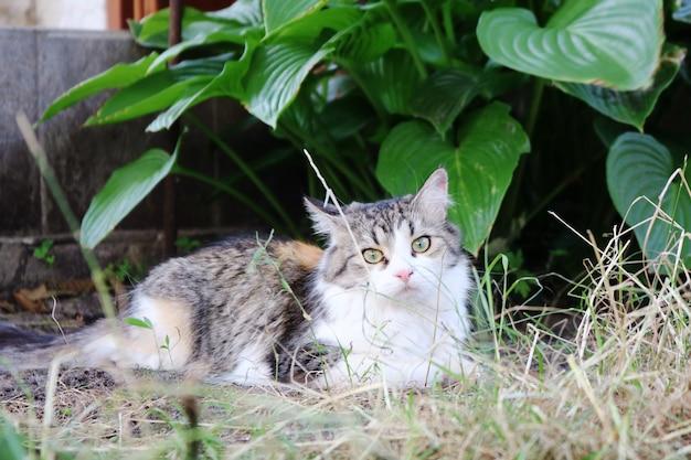Kat liggend op het gras in de tuin of in de tuin