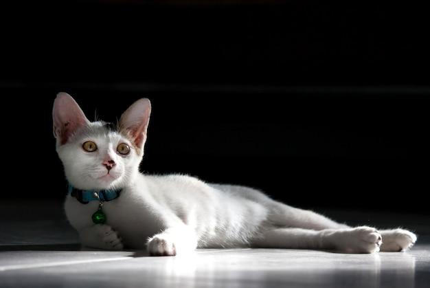 Kat liggend op zwarte kamer