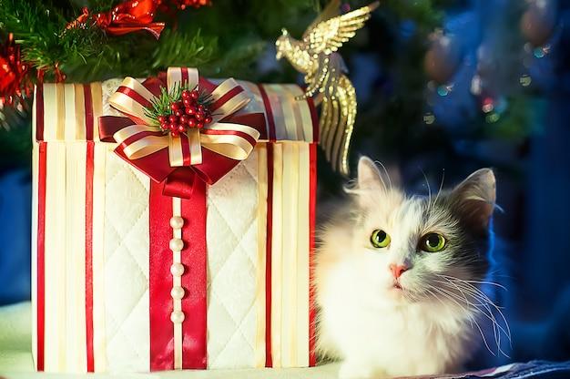 Kat ligt met geschenken onder de kerstboom