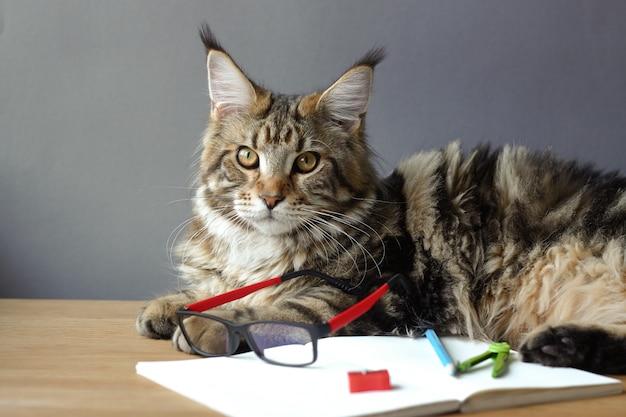 Kat ligt op een houten tafel met een open laptop en een bril