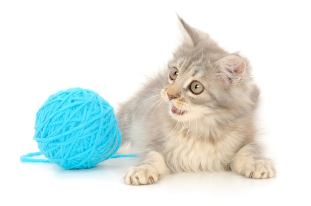 Kat met bal van garen dat op witte achtergrond wordt geïsoleerd