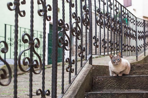 Kat met blauwe ogen in een steegje