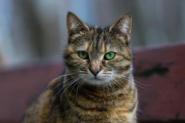 Kat met bruine vacht en groene ogen