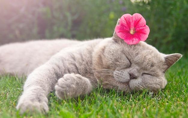 Kat met een roze petunia-bloem op zijn hoofd