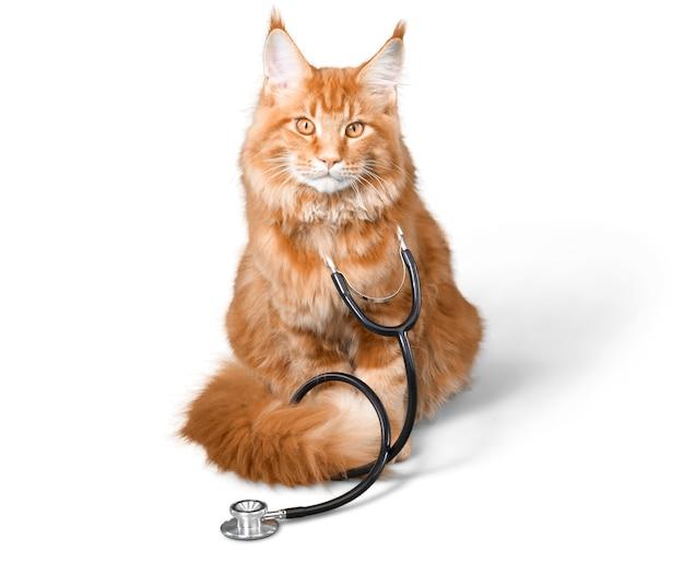 Kat met een stethoscoop op zijn neck.looking camera. geïsoleerd op witte achtergrond