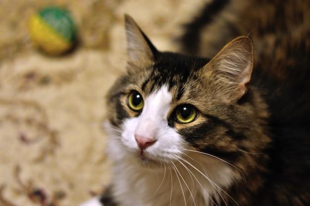 Kat met een stuk speelgoed op het tapijt