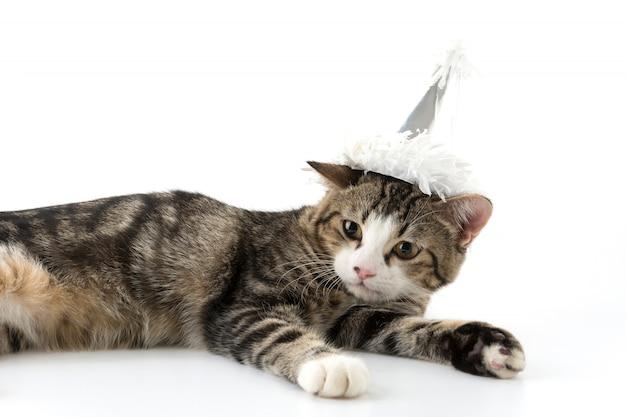 Kat met feesthoed