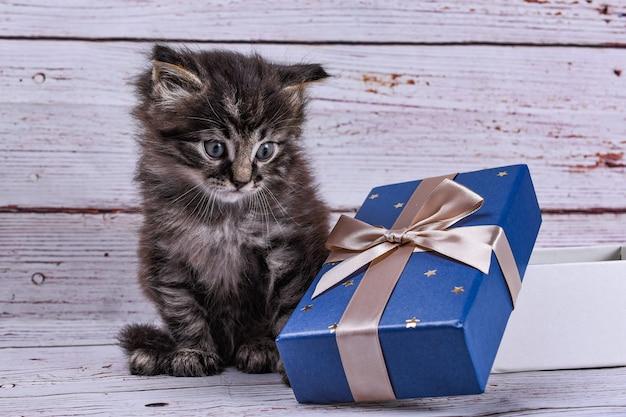 Kat met geschenkdoos