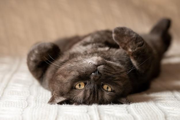 Kat met grappig gezicht liggend op bed zijn bel omhoog