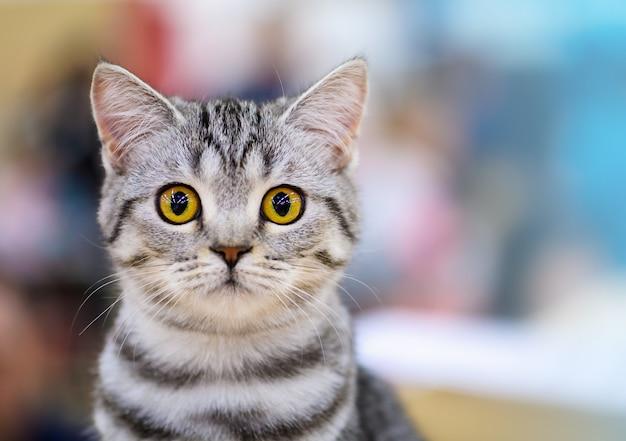 Kat met grote gele ogen