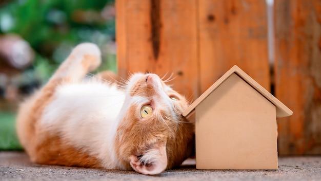 Kat met houten huis. zelfquarantaine en blijf thuis tijdens covid-19. mooi huisdier in de tuin met speelgoed. blijf thuis, blijf veilig en concept voor sociale afstand.