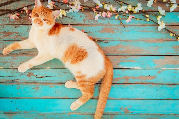 Kat met kersenbloesem bloemen op vintage houten achtergrond. vintage kleurtoon - concept bloem van lente of zomer achtergrond