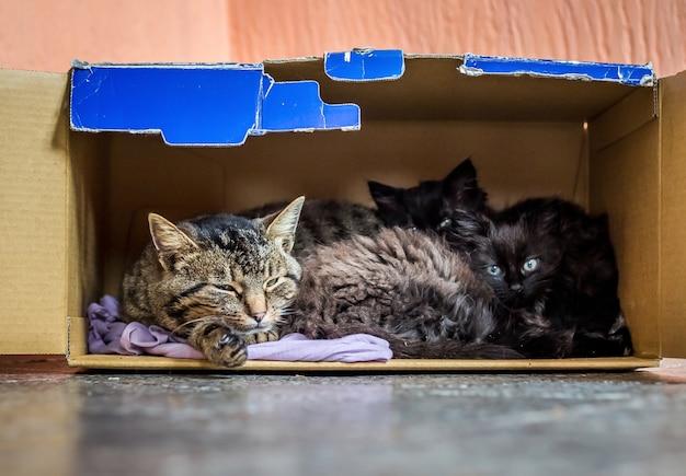 Kat met kleine kittens slaapt in een kartonnen doos