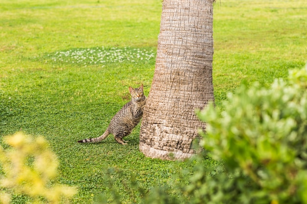 Kat met palmboom