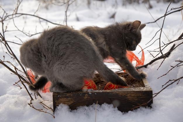 Kat met rode kerstmisbal op sneeuw