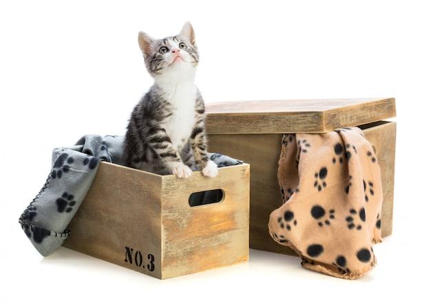 Kat met verschillende houten kisten