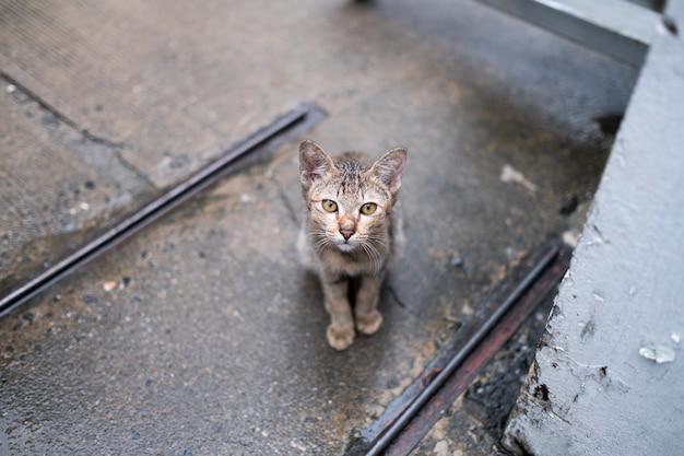 Kat naar je kijkt