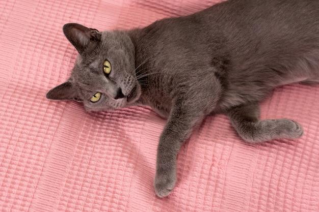 Kat ontspannen op de bank en deken