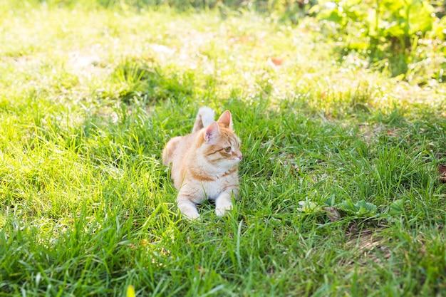 Kat ontspannen op groen gras in zomerdag
