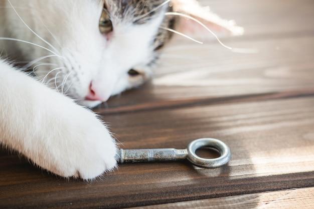 Kat ontspant met oude sleutel. het concept van het kopen van een nieuw huis