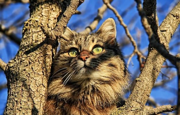 Kat op een boom die naar de zon kijkt
