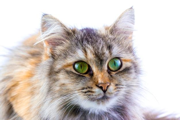 Kat op een witte achtergrond