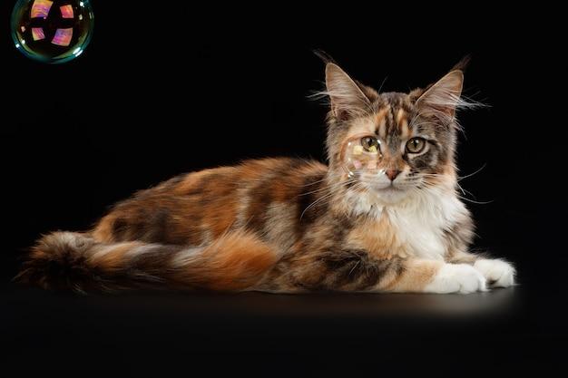Kat op een zwarte achtergrond