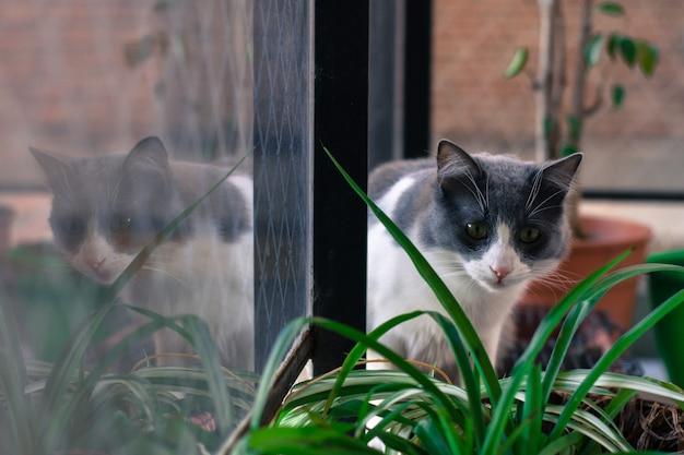 Kat op het raam