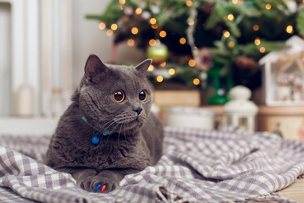 Kat op plaid, tegen de achtergrond van de kerstboom met slinger