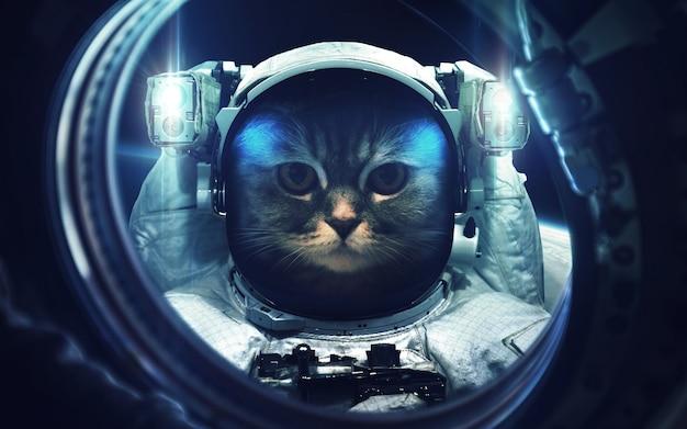 Kat op ruimtewandeling