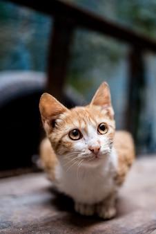 Kat op straat in een kruiwagen