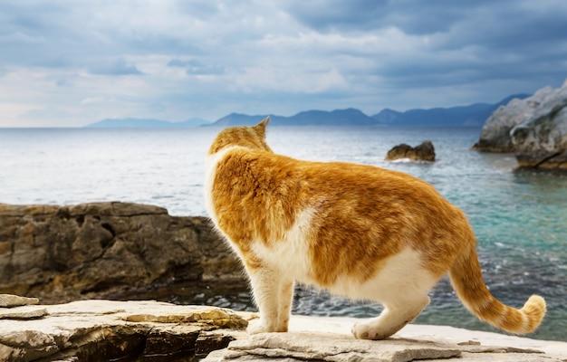 Kat op zeekust