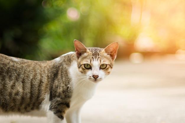 Kat opzoeken