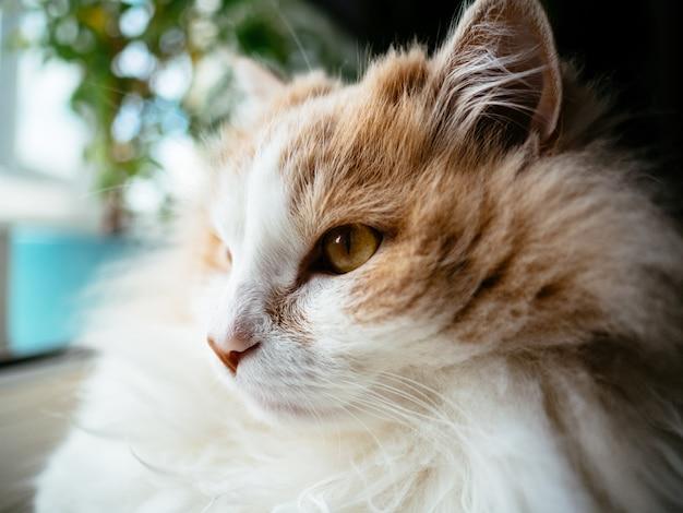 Kat oranje en wit liggend op de vensterbank